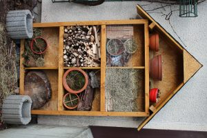 insekten-projekt-19