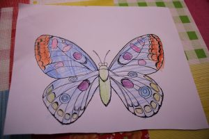 insekten-projekt-20