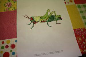 insekten-projekt-21