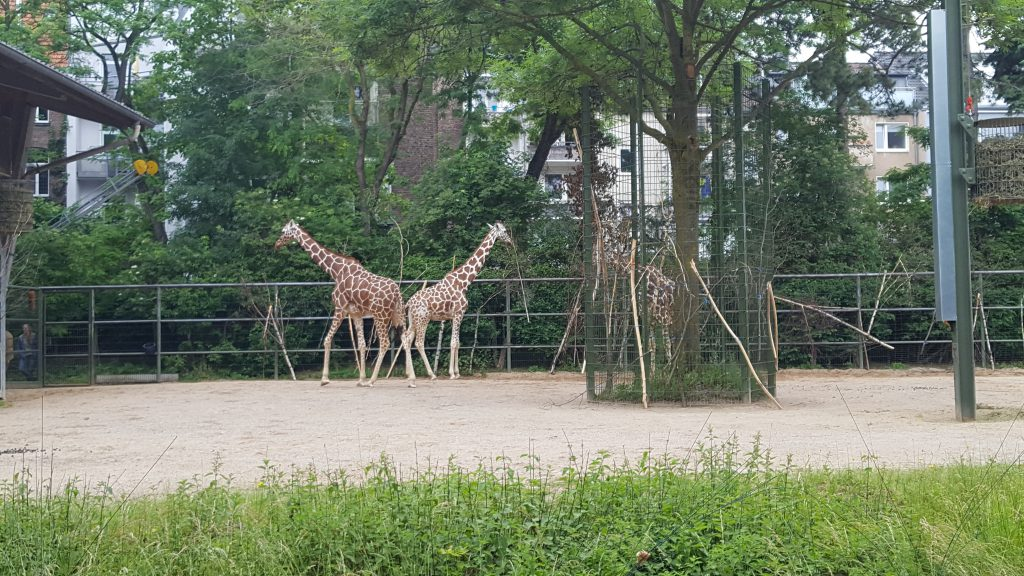 koelner-zoo-2019-2-41