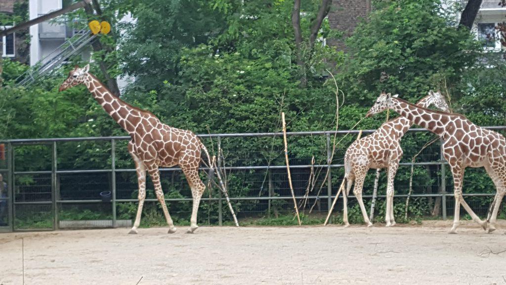 koelner-zoo-2019-2-42