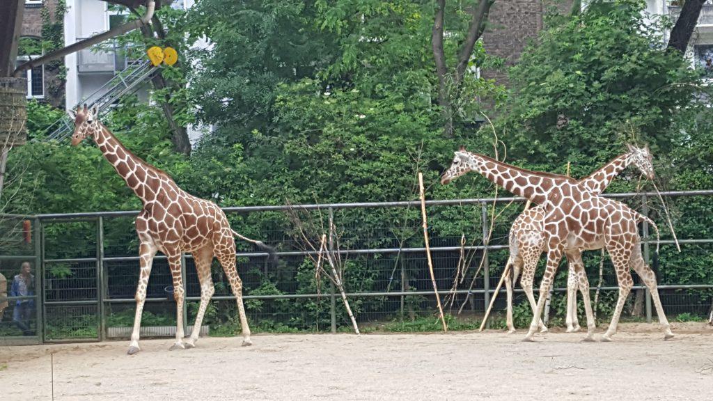 koelner-zoo-2019-2-43