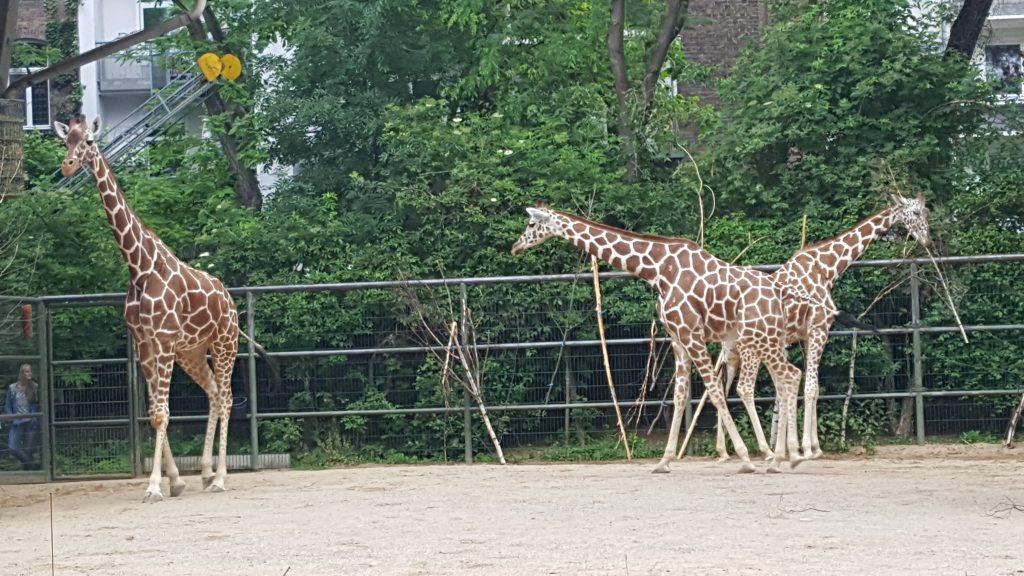 koelner-zoo-2019-2-44