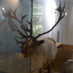 neanderthal-museum-15