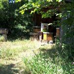 sommerferien-2017-besuch-imker-juli-7