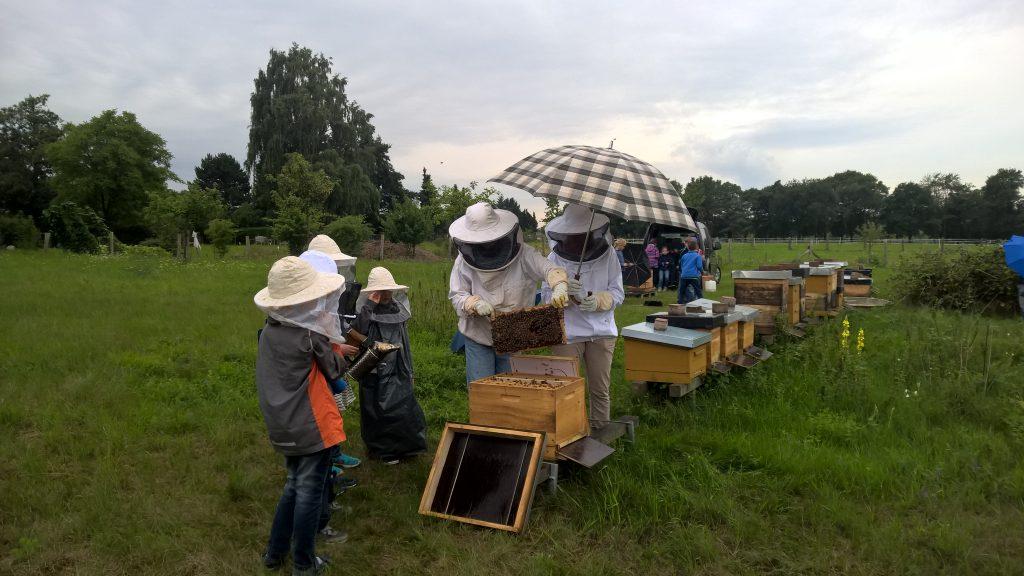 sommerferien-2017-bienenstoecke-ruth-pott-25
