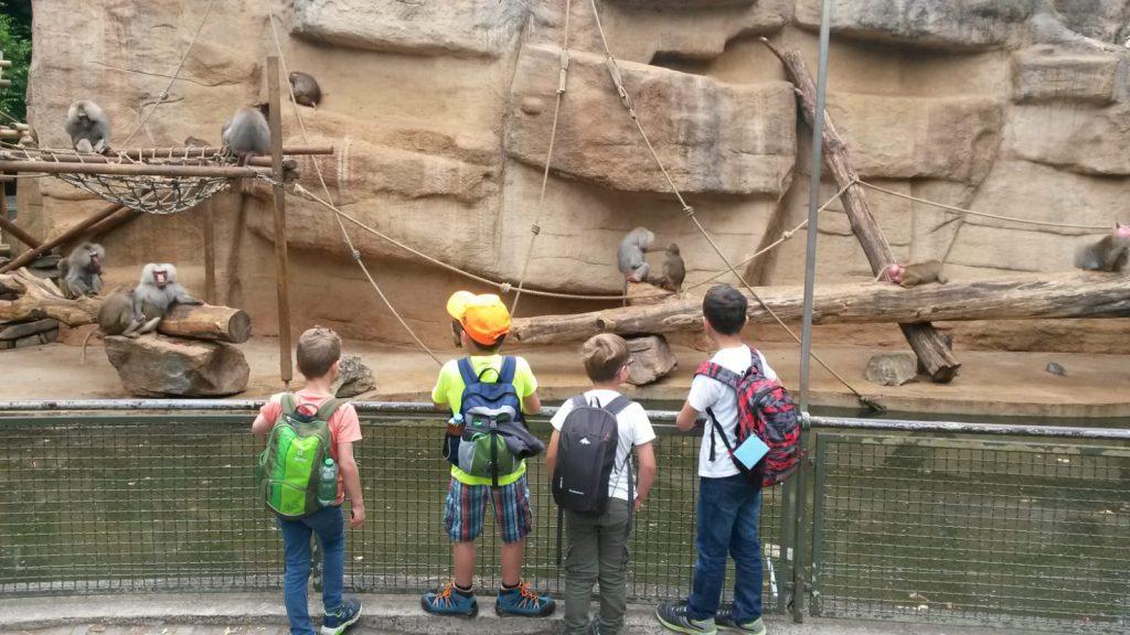 Ausflug in den Kölner Zoo