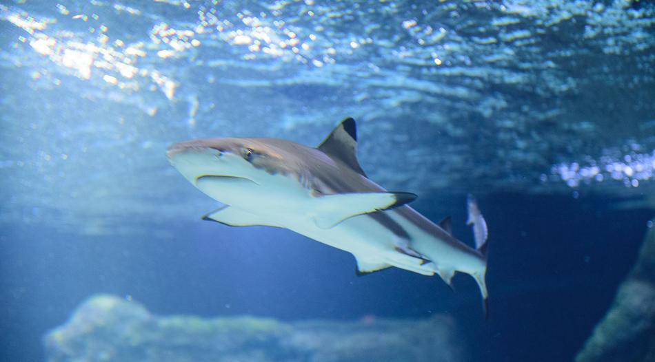Hai-Fütterung live aus dem Aquazoo in Düsseldorf