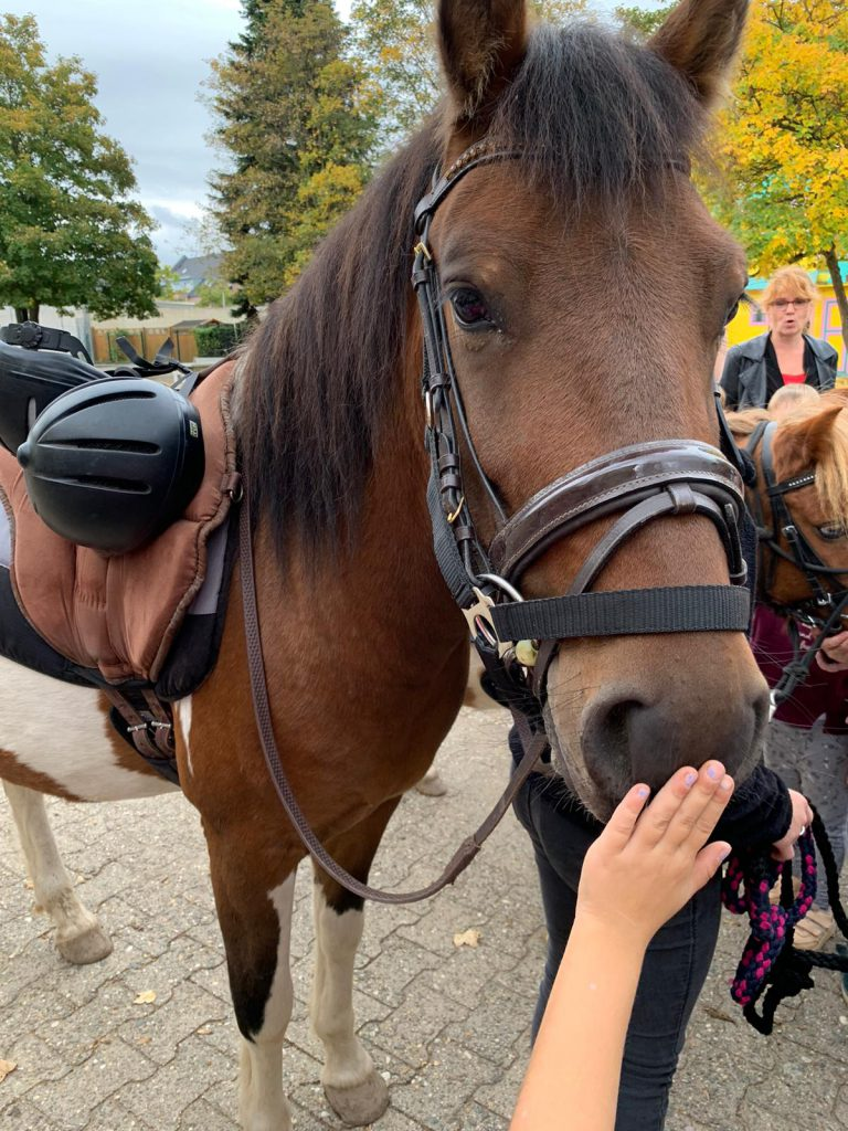 Pony's in der OGS